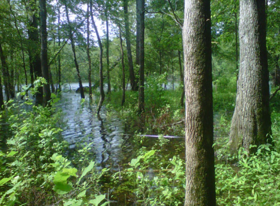 National Wetlands Condition Assessment